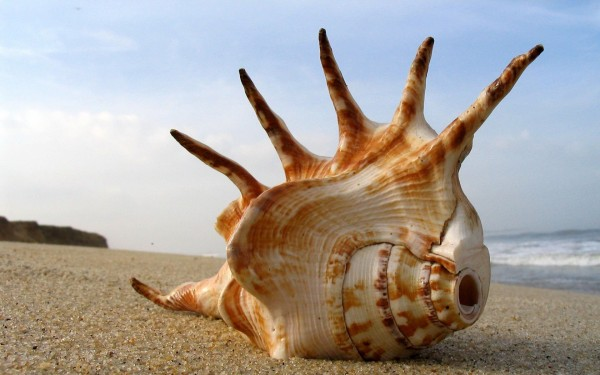 Seashell-on-the-sand
